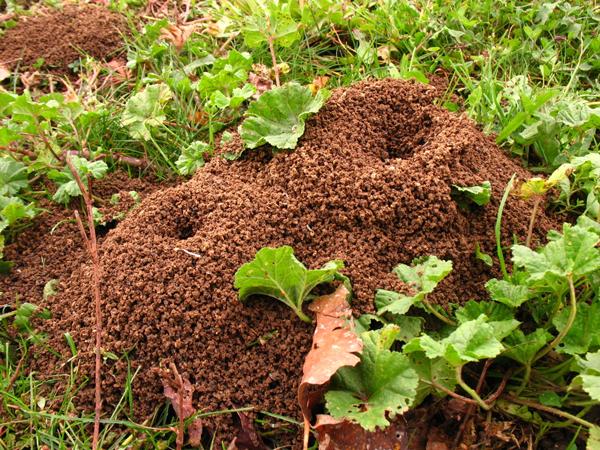 Trucs pour détruire un nid de fourmis